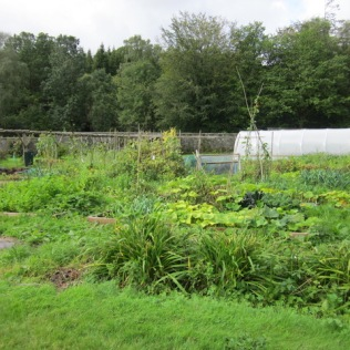 Now an established part of the garden. (September)