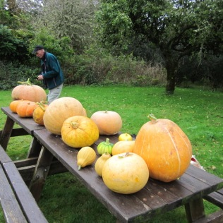 Pumpkin competition entries, with the eventual winner in the background. (October)